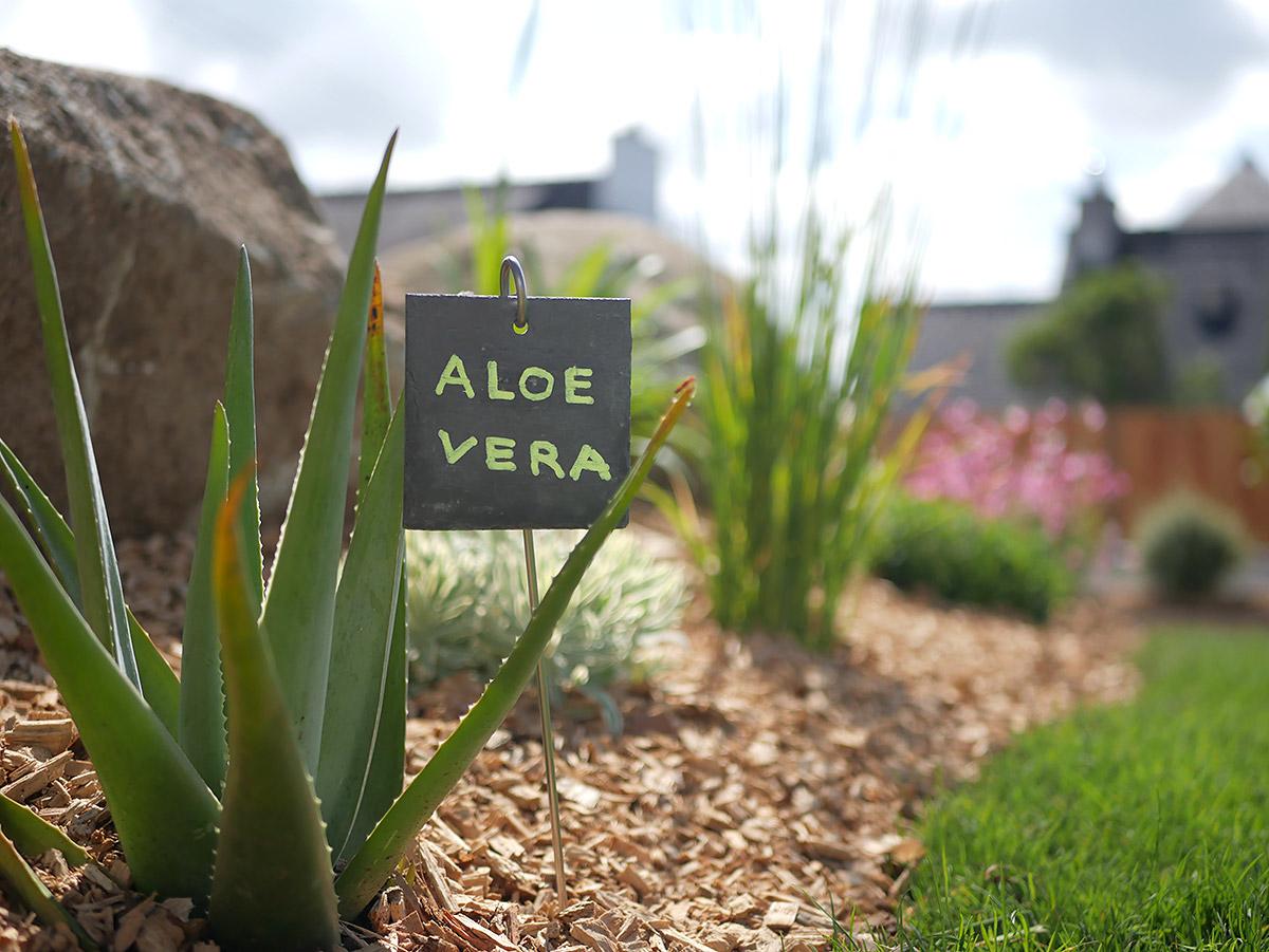 Magnifique jardin arboré pour le Villa des Aloès.